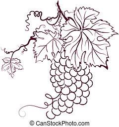 feuilles, raisins
