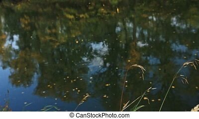 feuilles, rivière, jaune, surface, automne