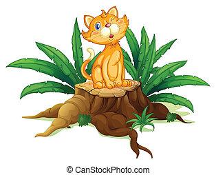 feuilles, souche, séance chat