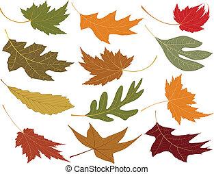 feuilles, soufflé, chute vent