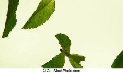feuilles thé, haut, vert, frais, fin, menthe