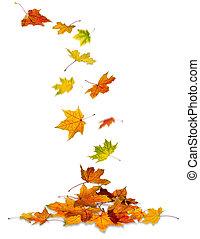 feuilles, tomber, érable
