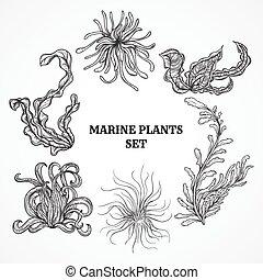 feuilles, usines, marin, algue