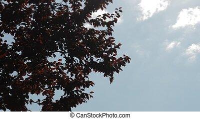 feuilles, vent, rouges, mouvementde va-et-vient