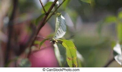 feuilles, vert, hd, arbre