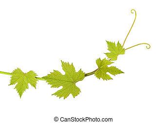 feuilles, vigne