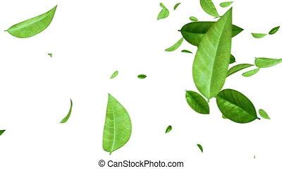 feuilles, voler, blanc vert