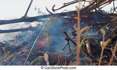 feux, flamme, été, seconde, balles, sombre, smoke., herbe, vert, brûlures, nature, jaune, puissant, fumée, danger, brûlures, buissons, arbre, bleu, branches, rise., noir, roseaux, gris, fraction, sec, concept