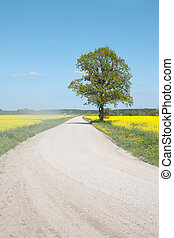field., route, canola