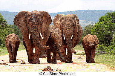 figure, éléphants
