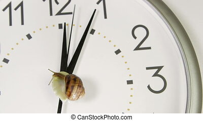 figure, escargot, horloge