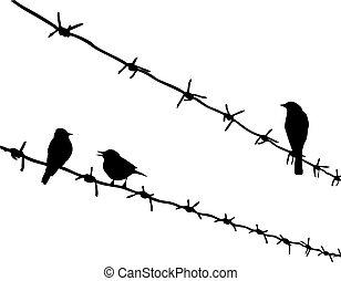 fil fer barbelé, silhouette, trois, vecteur, oiseaux