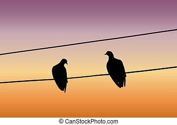 fil, séance, pigeons, ciel, deux, contre, silhouettes, coucher soleil