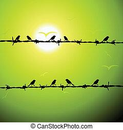 fil, silhouette, oiseaux