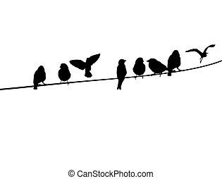 fil, téléphone, oiseaux