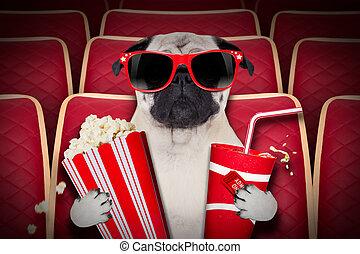 films, chien