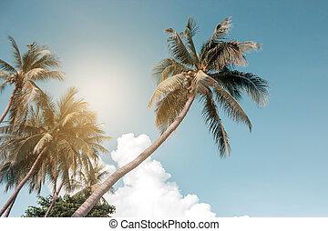 filter., arbres, fond, beau, paume, vendange, noix coco, exotique