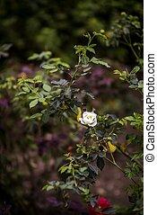fin, arrière-plan., haut, macro., bourgeon, foyer, cerise, bleu, arbre, sélectif, fleurs ressort, fond, beau, image, nature, ciel, sauvage