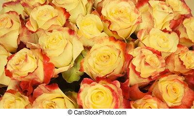 fin, bronzage, haut, roses