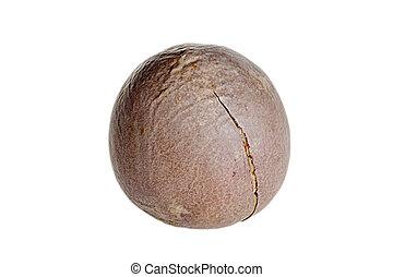 fin, noix coco, haut