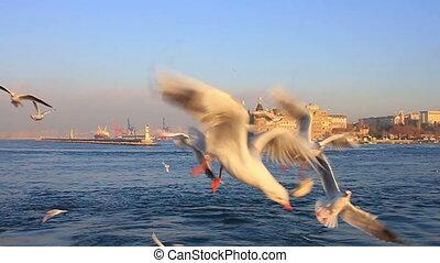 fin, seabirds., alimentation, haut, oiseaux