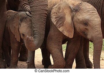 fin, troupeau, haut, éléphants