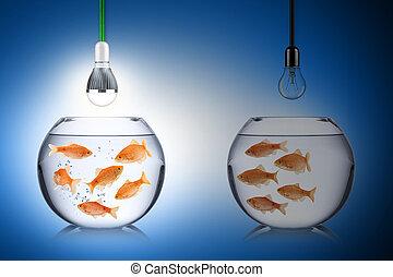 fish, énergie