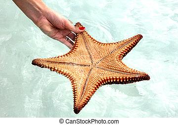 fish, étoile