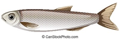 fish, blanc gris, une, fond