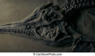 fish, en mouvement, fossile, jurassique, coup