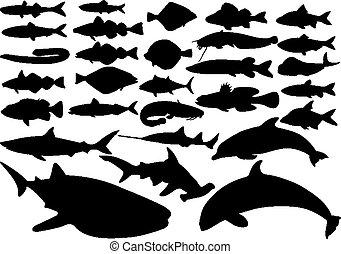 fish, ensemble, vecteur