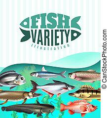 fish, illustration, variété