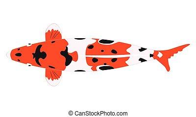 fish, koi, orange