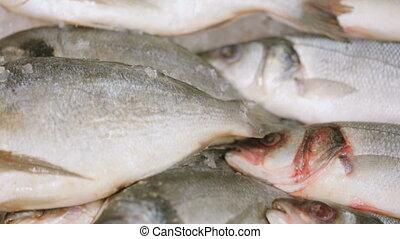 fish, magasin épicerie