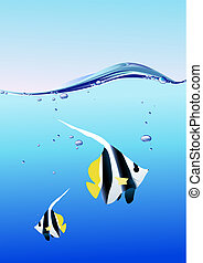 fish, océan