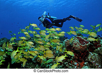 fish, plongeur sous-marine, école