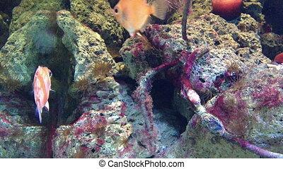 fish, récif, corail, exotique
