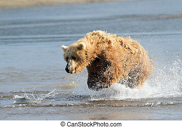 fish, sauter, grizzly