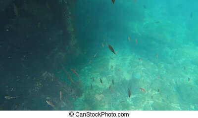 fish, sous-marin, bateau submergé, algue, nager, coraux, vue, mussels., autour de, petit, couvert