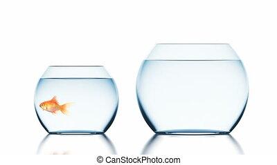 fishbowl, animation, poisson rouge, sauts, beau, 3d, plus grand, 4k
