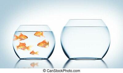 fishbowl, hd, sauts, autre, 3d, ultra, animation, beau, poisson rouge, 4k