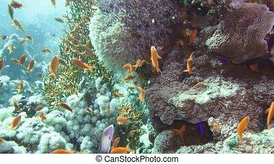 fishes., mer, corail, fish, seascape., sous-marin, coloré, récif, reef., scene., marine., exotique, jardin