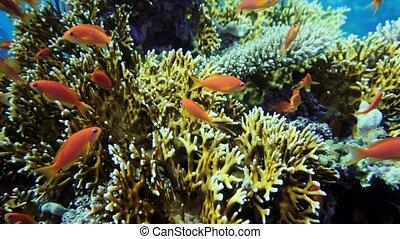 fishes., scene., marine., reef., coloré, poisson tropical, mer, récif, sous-marin, jardin corail, seascape.