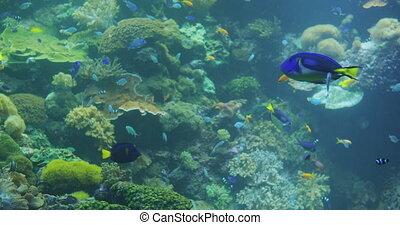 fishes., sous-marin, mer, aquarium., exotique, coloré, poissons