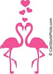 flamants rose, amour, deux