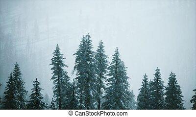 flanc montagne, cône, hiver, couvert, neige, arbres