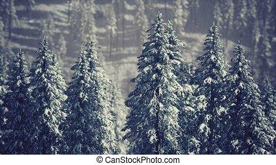 flanc montagne, hiver, couvert, arbres, cône, neige