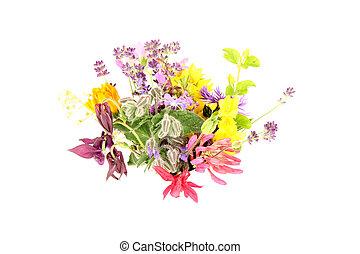 fleur, été, puissance