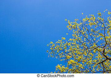 fleur bleue, espace, ciel, fond jaune, copie