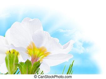 fleur bleue, printemps, ciel, soleil, frontière